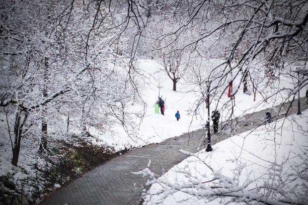snowy sleds